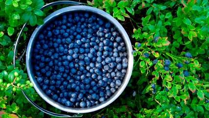 blueberries bucket